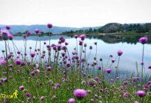 تصویر از دریاچه حلیمه جان رودبار