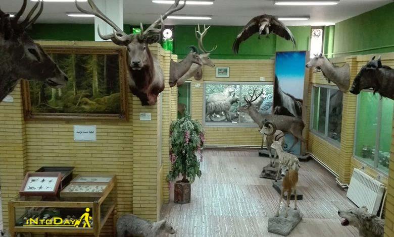 موزه تاریخ طبیعی آذربایجان