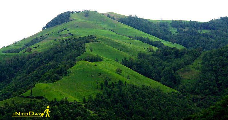 جنگل مشه از جاذبه های طبیعی اردبیل