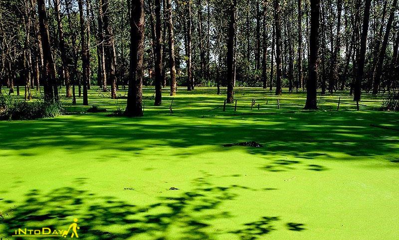 مرداب و پارک جنگلی سراوان در رشت