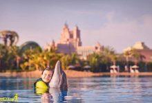 Photo of دلفین بی دبی در جزیره نخل