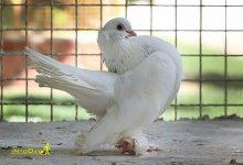 Photo of باغ پرندگان چهارباغ کرج