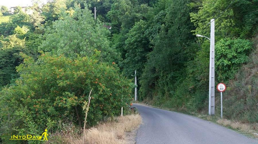 جاده لیلاکوه