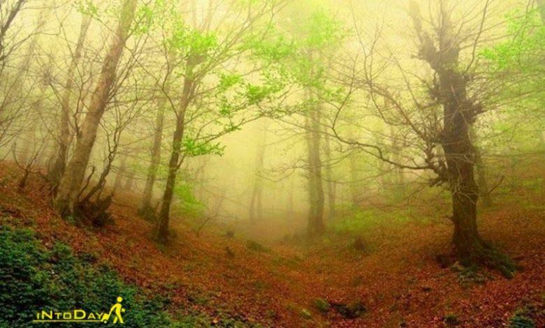 جنگل لیلاکوه
