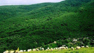 روستای افجه