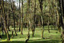 Photo of پارک جنگلی فین چالوس