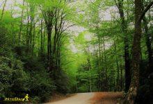 Photo of پارک جنگلی بزچفت یا بابلکنار منطقه نمونه گردشگری