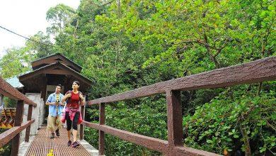 تصویر از پارک ملی پنانگ
