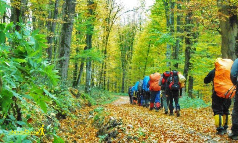 طبیعت گردی در جنگل راش ساری