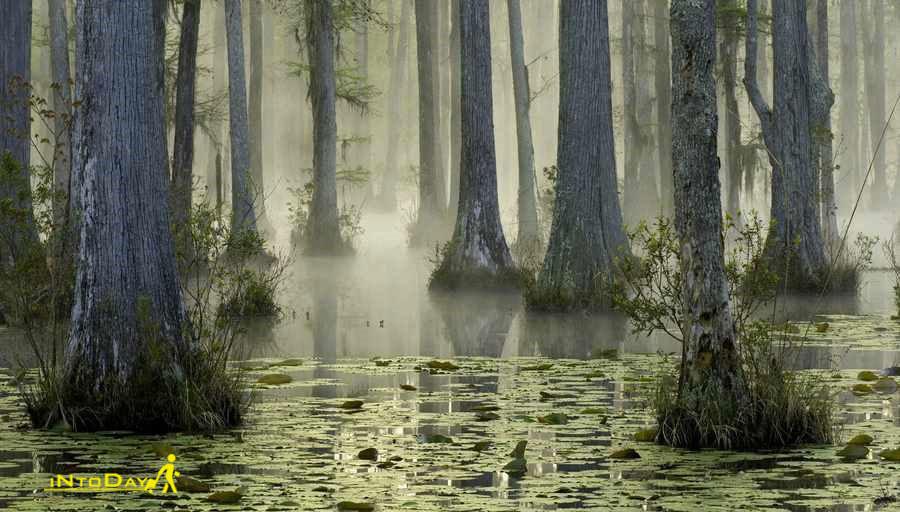 باغ سایپرس کارولینای جنوبی