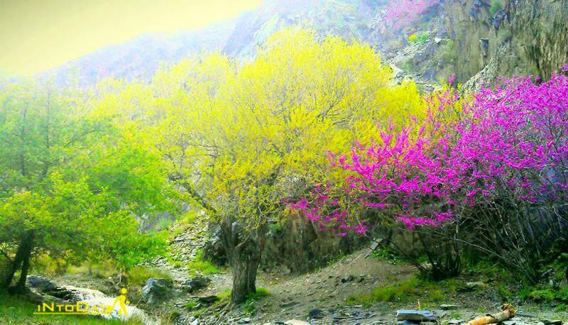 طبیعت دره ارغوان مشهد