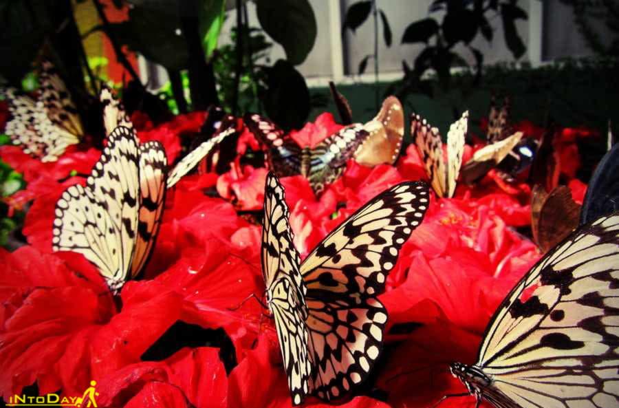 باغ پروانه های پنانگ