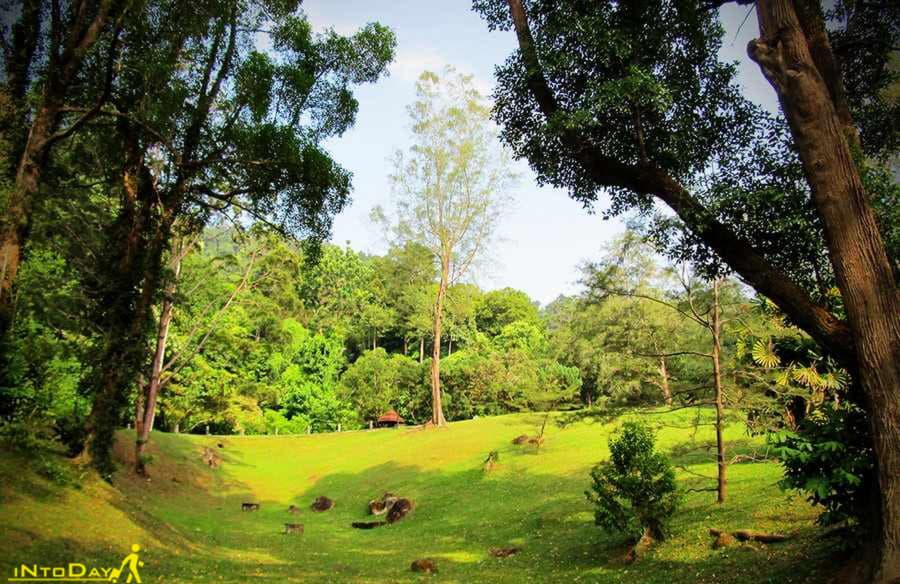 باغ گیاه شناسی پنانگ