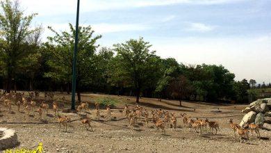 حیات وحش پارک چیتگر