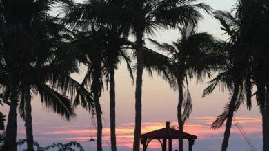 طلوع خورشید در ساحل درختان نارگیل کیش