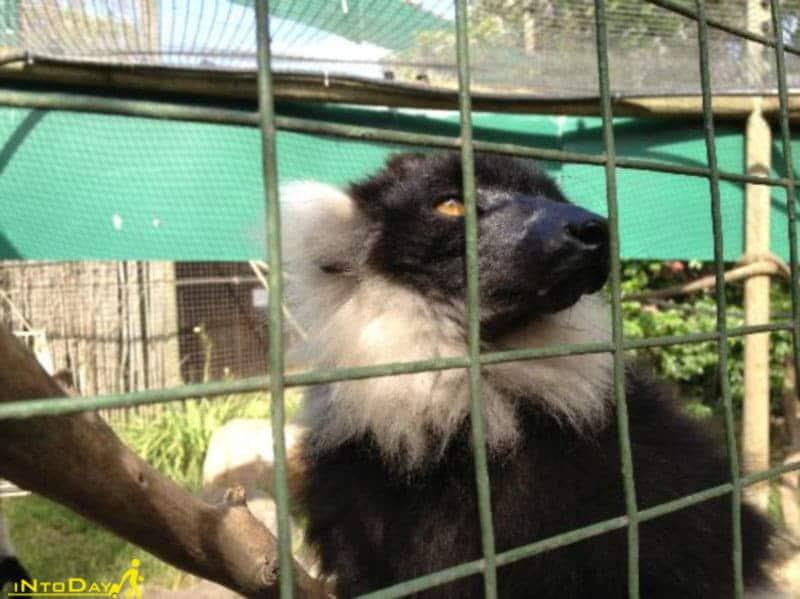 مرکز پستانداران شهر میمون کیپ تاون